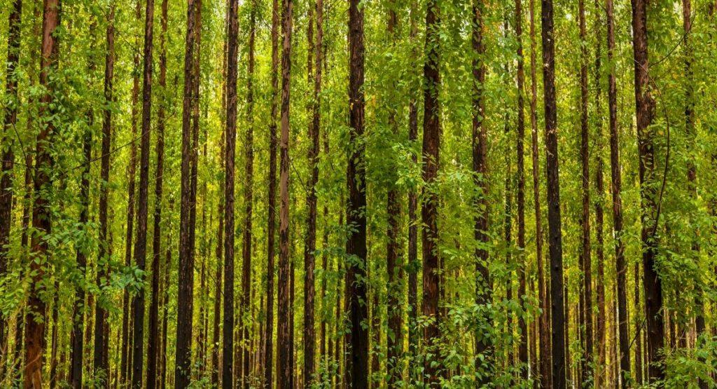 foreste